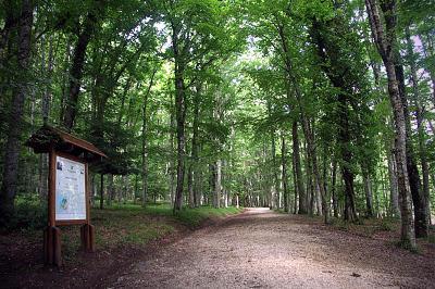 Foresta Umbra nel Parco Nazionale del Gargano.